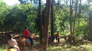 Rutas a Caballo en el entorno del Ecoparque de Marin a solo 30min de Vigo