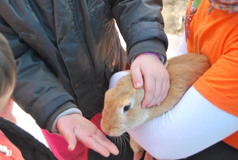 En la Eco Granja de Aventura Rías Baixas conocerás como viven y se alimentan los animales.